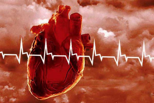 сердечно-сосудистая-система