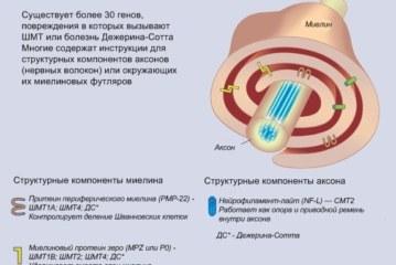Факты о наследственной мото-сенсорной нейропатии Шарко-Мари-Тус