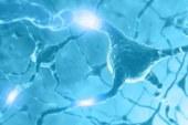 Свето-активируемые нейроны, полученные из стволовых клеток, восстанавливают работу парализованных мышц