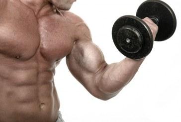 В лаборатории вырастили самовосстанавливающиеся мышцы