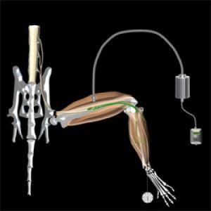 Ученые разработали новый способ, позволяющий контролировать сокращение мышц с помощью света. (фото: Barney Bryson)