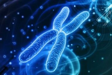 Российские исследователи создали искусственную хромосому