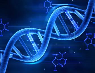 Доклиническая оценка тамоксифена и других селективных модуляторов рецепторов эстрогенов у дистрофических мышей mdx5Cv.