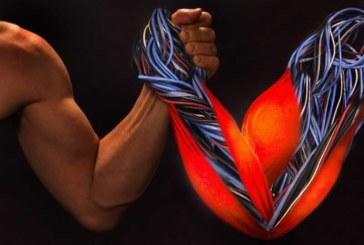 В лаборатории впервые выращены функционирующие мышцы человека