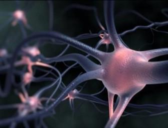 Найдена новая терапевтическая мишень для лечения некоторых нейродегенеративных заболеваний