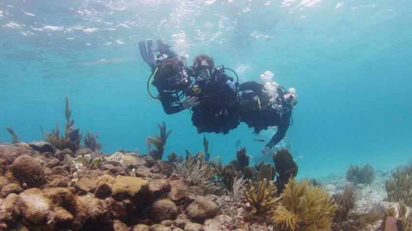 we-went-on-a-historic-shark-dive-with-a-quad-amputee-144_002