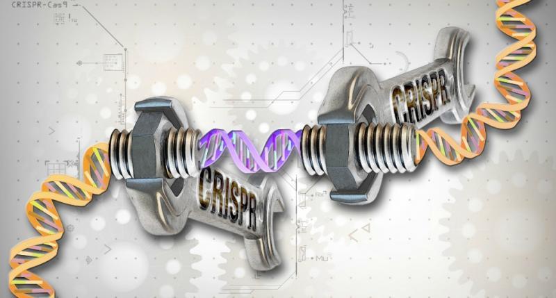 В Великобритании начались эксперименты по изменению генома человеческих эмбрионов
