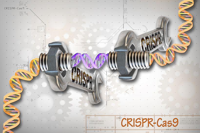 Подведены итоги первого десятилетия изучения CRISPR