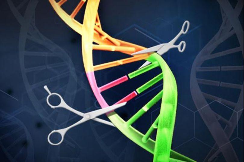 """Швейцарские ученые сообщили об успехах в применении """"генетических ножниц"""""""