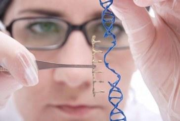Разработка платформы  CRISPR-Cas9 — опосредованного редактирования гена для восстановления рамки считывания у 60% пациентов с мышечной дистрофией Дюшенна.