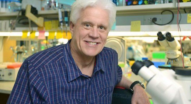 Ученые обнаружили новый белок, который является фундаментальным для формирования мышц