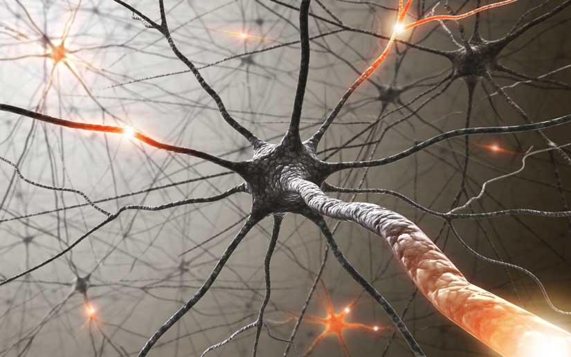 Впервые за 20 лет одобрен новый препарат для лечения бокового амиотрофического склероза