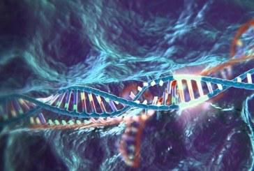 Эксперты опровергли статью о побочных мутациях при CRISPR/Cas9