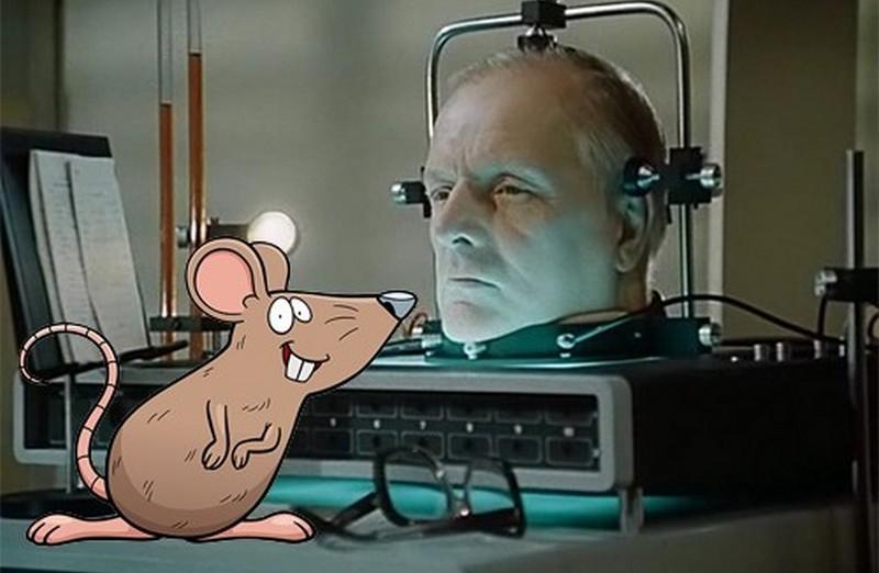 Пересадка головы возможна: доказано на крысах