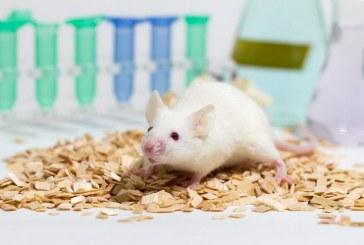 Одновременное ингибирование трех белков может увеличить мышечную массу у мышей с мышечной дистрофией.