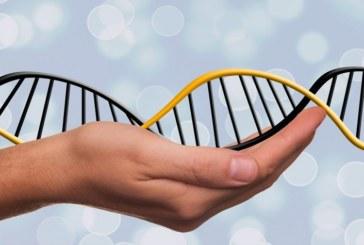 Ученые впервые удалили из ДНК человеческого эмбриона ген, отвечающий за заболевание