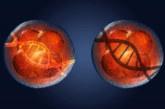 Ученые впервые отключили ген в «полноценном» человеческом зародыше
