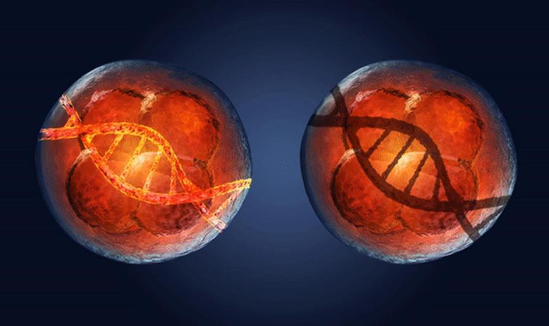 Ученые впервые отключили ген в