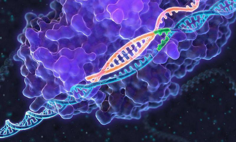 Разработан более простой метод редактирования ДНК, чем CRISPR