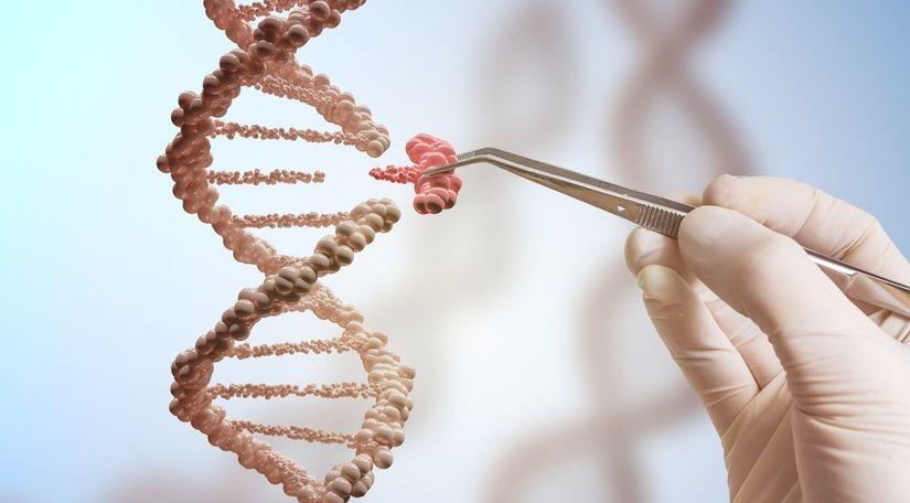 Новая стратегия CRISPR исправляет более широкий диапазон мутаций при миодистрофии Дюшенна
