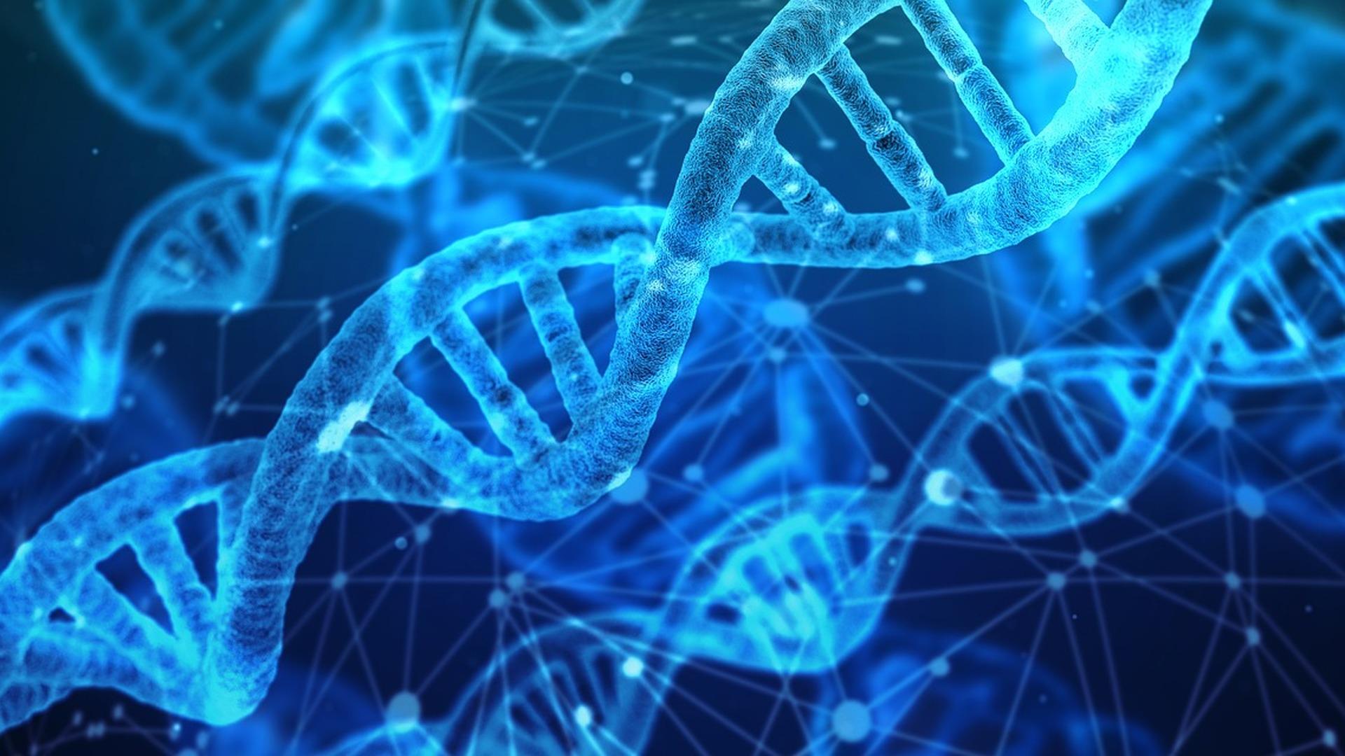 Управление генами обратило вспять мышечную дистрофию