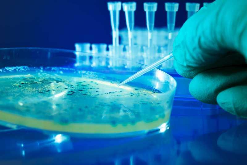 Мышечная дистрофия: перепрограммированные взрослые стволовые клетки человека спасают больные мышцы у мышей