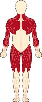 Duchenne-Body-Front