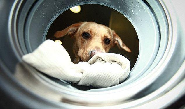 Стиральная машина для инвалидов Woof to Wash управляется служебными собаками