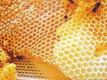 Немного о свойствах маточного (пчелиного) молочка-препарат АПИЛАК