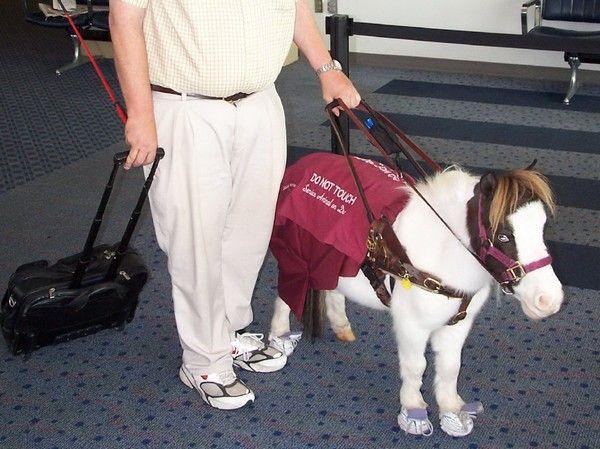 Лошади-поводыри. Источник фото: Википедия