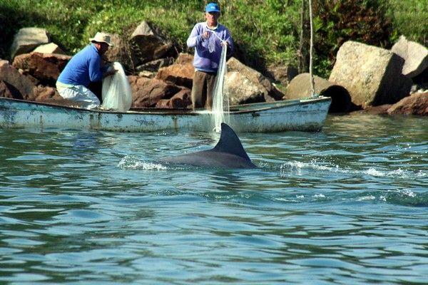 Дельфины на помощь рыбакам. Источник фото: Plymouth.ac.uk