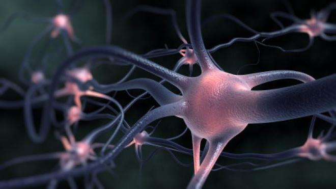 Обнаружен новый сигнальный путь, участвующий в развитии бокового амиотрофического склероза