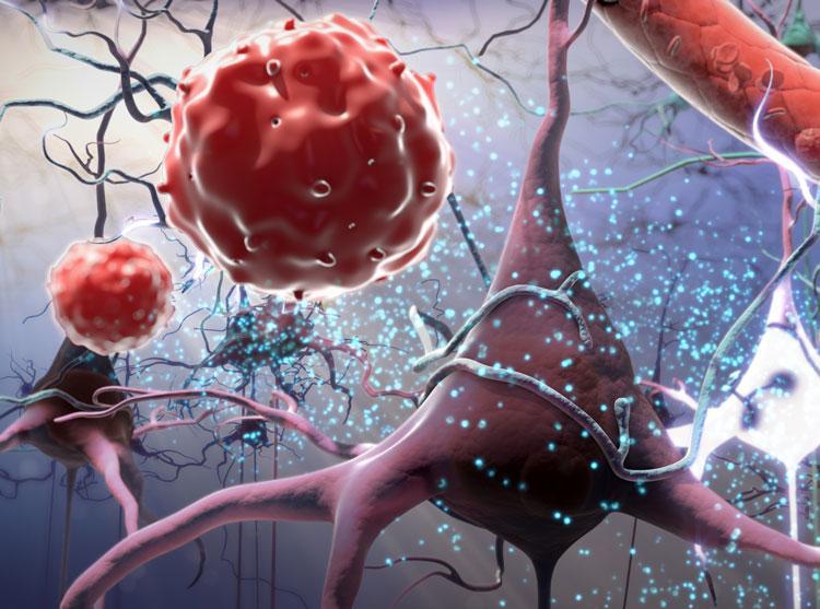 Стволовая клетка: взгляд изнутри