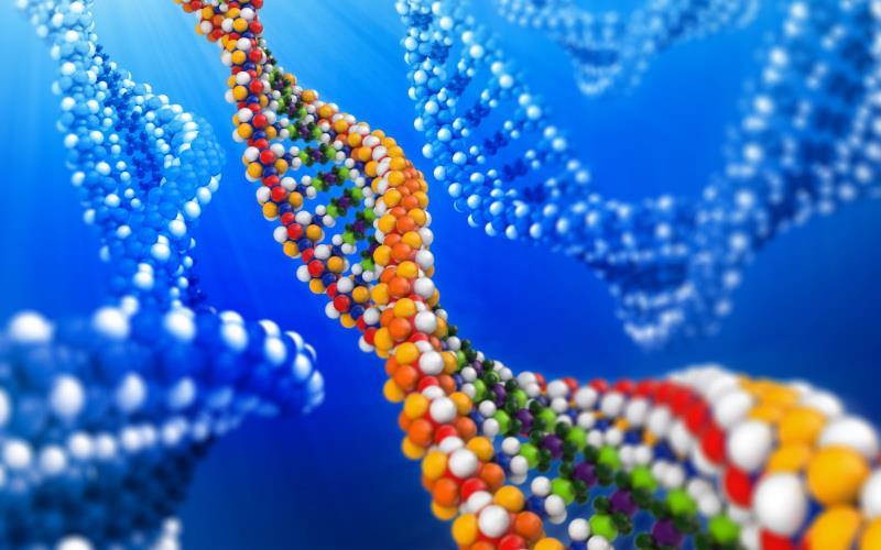 Терапевтическое использование CRISPR / Cas9 системы при мышечной дистрофии Дюшенна