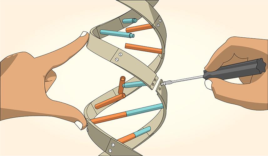 Болезни, диета, измены: что может рассказать о белорусах тест ДНК