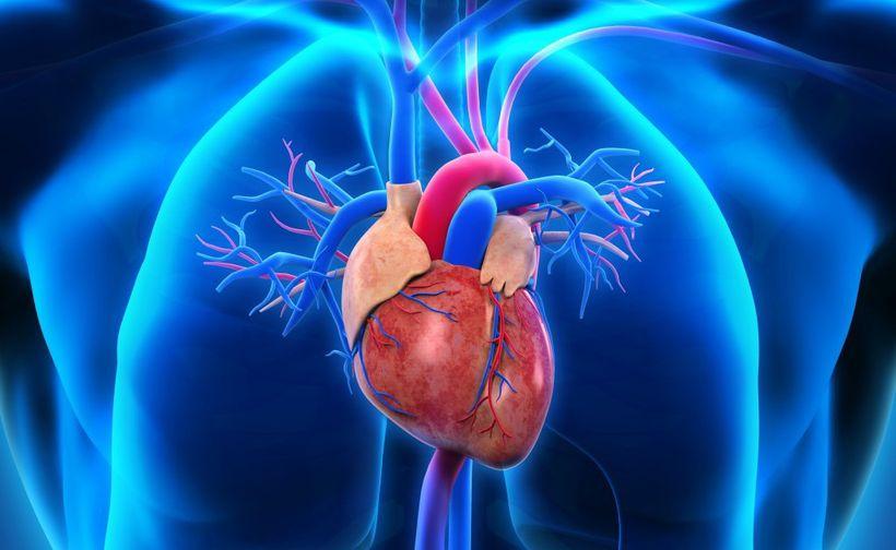 Молодые люди с миодистрофией Дюшенна имеющие легкую аритмию не относятся к группе риска поражения сердца.