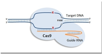 CRISPR-Cas9-System-for-iPS