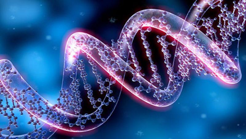 """Ученые научились редактировать ДНК человека с точностью в одну """"букву"""""""