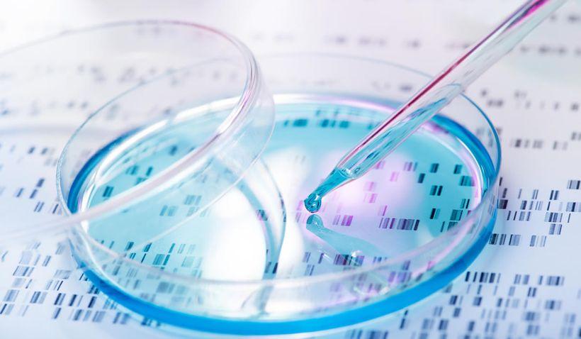Терапия стволовыми клетками не несет риска развития рака
