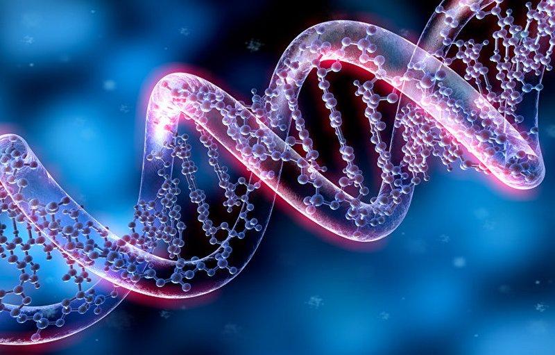 СМИ: ученые в США впервые модифицировали ДНК человеческого эмбриона