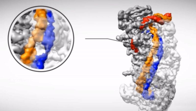 Ученые выяснили, как сделать новый геномный редактор безопасным для людей