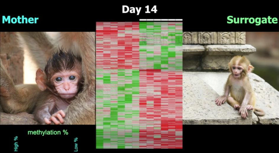 Моше Шиф: Как опыт ранних лет записывается в ДНК