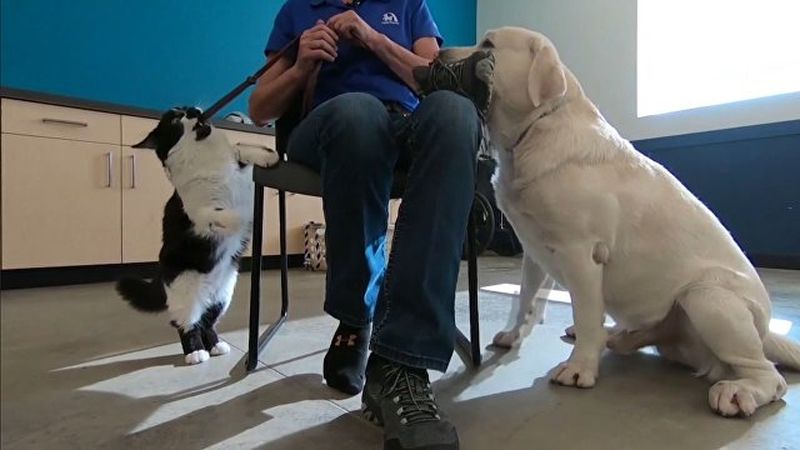 """Кот Собака """"тренирует"""" псов для людей с ограниченными возможностями здоровья"""