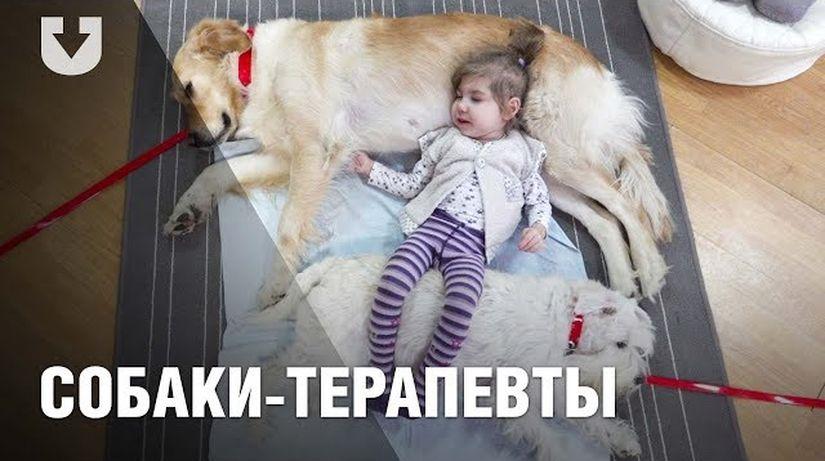 """""""Лерка начала улыбаться, и это уже прогресс"""". Как собаки помогают врачам лечить детей"""
