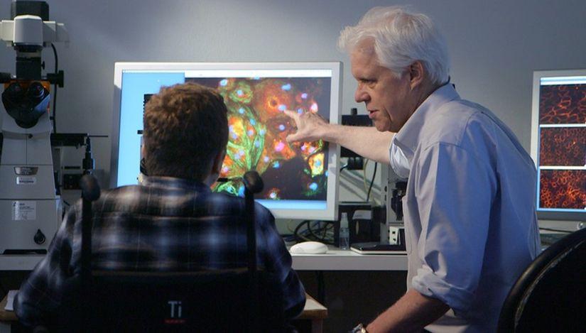 Технология CRISPR подарит годы жизни пациентам с мышечной дистрофией Дюшенна