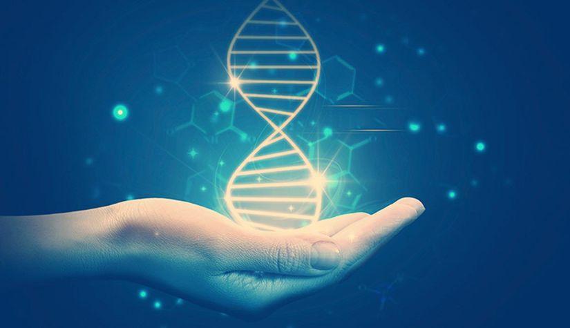 Сибирские ученые вывели новое соединение для лечения редкого вида мышечной дистрофии