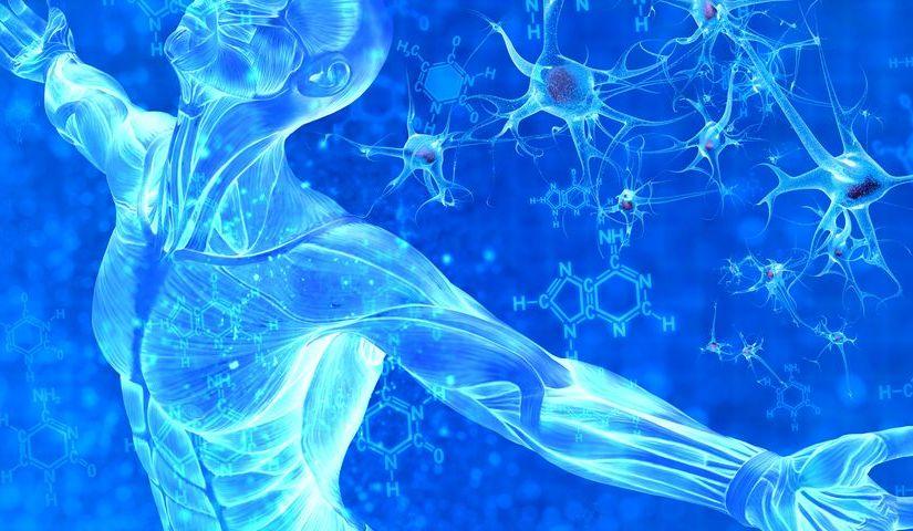 Ученые создают мышечные клетки в лаборатории