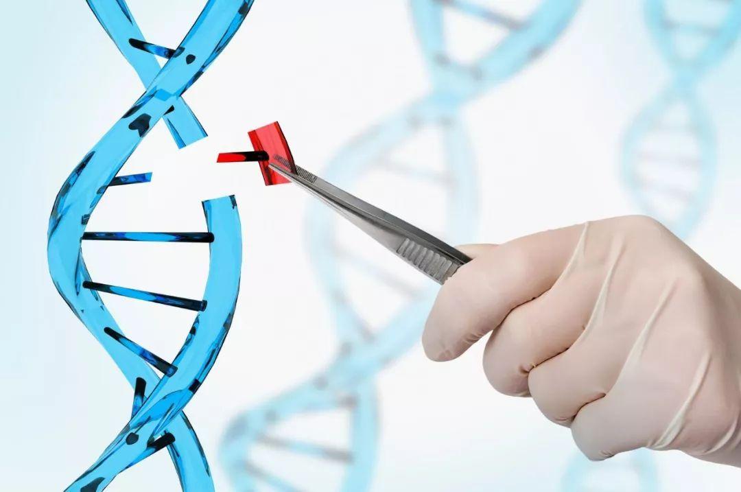 CRISPR способствует уменьшению симптомов мышечной дистрофии — эксперимент на мышах