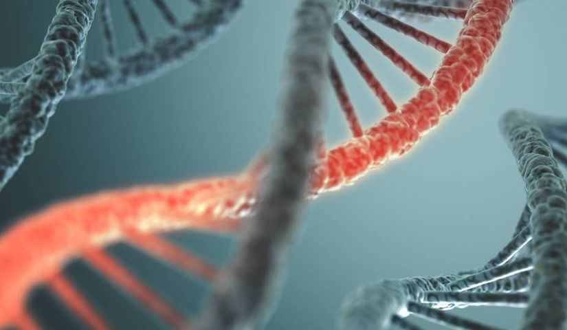 Редактирование генов CRISPR устраняет мышечную дистрофию у свиней