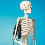 «Оживляя» робота: как самому сделать силиконовые мышцы